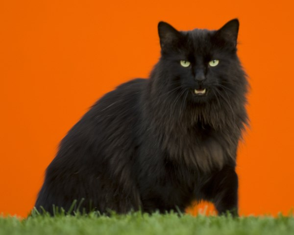 weighing in at a whopping 30 pounds this fat cat was the heaviest finalist that the pdsas fitness competition has ever