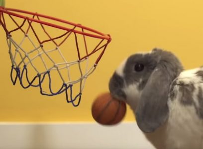 world record bunny basketball