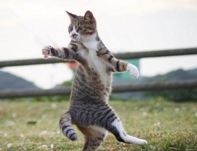 Cat Ninja Poses