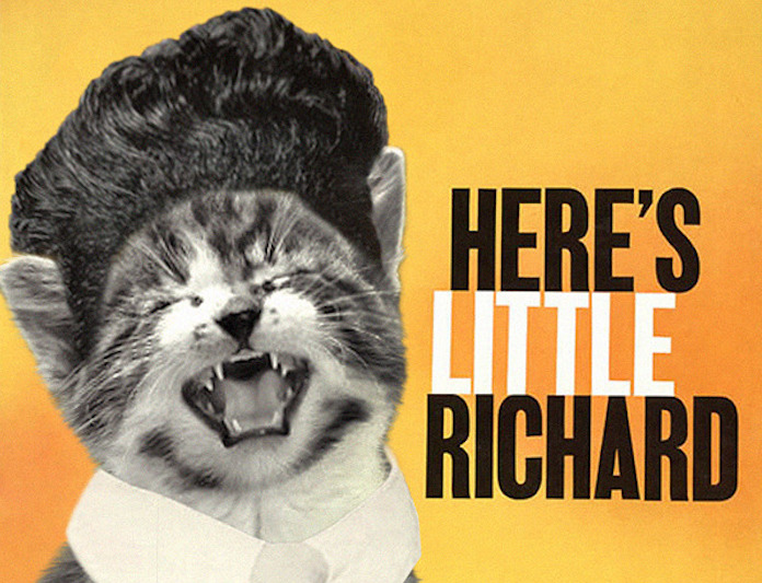 Kitten Covers Little Richard