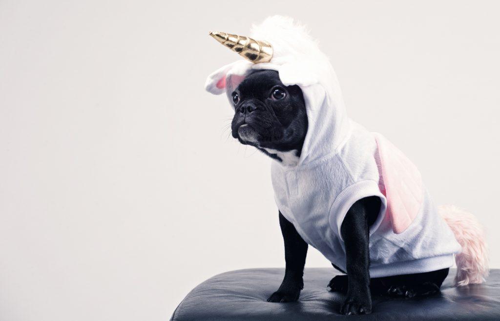10 Weirdest Dog Breeds