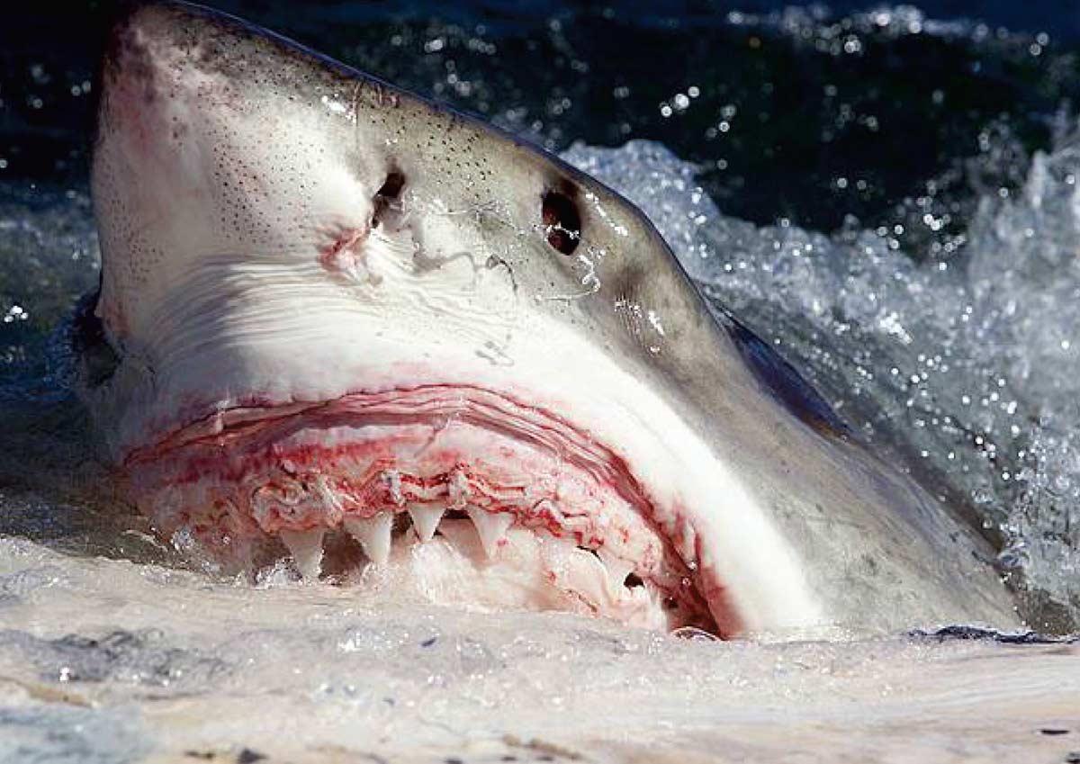 20 Scary Shark Attacks