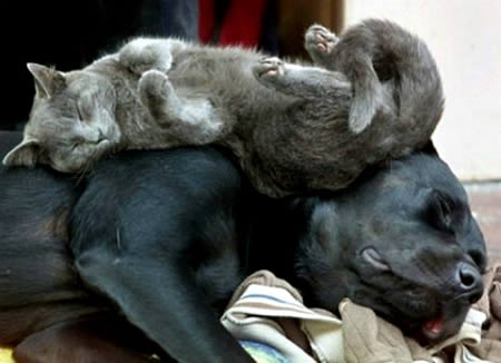 kedi ile köğeğin dostluğu