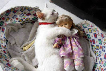 oyuncak bebekle uyuyan kedi