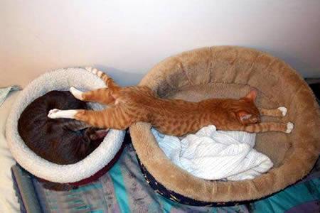 uykucu kedi