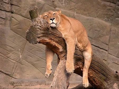 Hasil gambar untuk sleeping animal