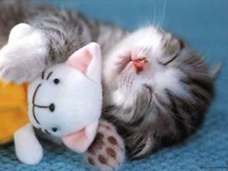 oynarken yorulmuş kedi