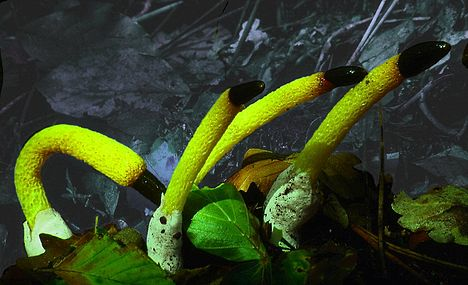 10 Most Amazing Mushrooms - cool mushrooms - Oddee