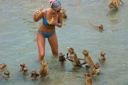 Let that be a lesson to you babe, never steal food of a wild pack of monkeys when you're t the beach.