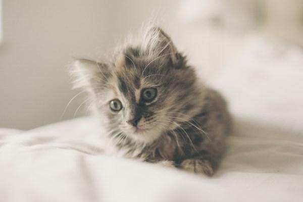 8worlds smallest cat