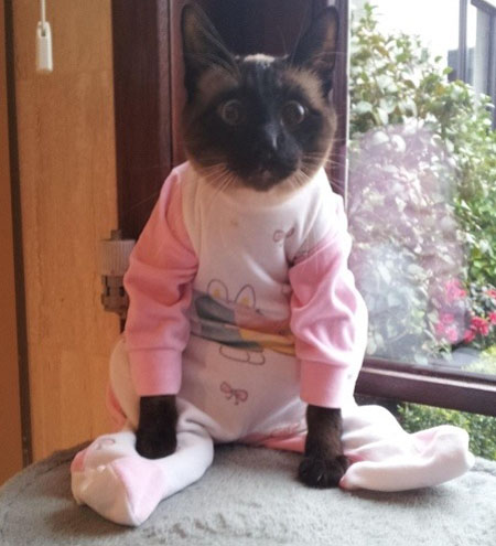 10 Funniest Clothes-Wearing Animals - animals, clothes ...