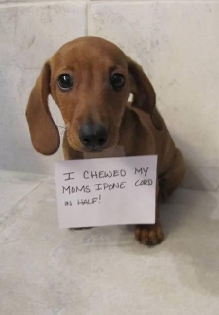 15 Absolutely Hilarious Dogshaming Signs Dog Shaming