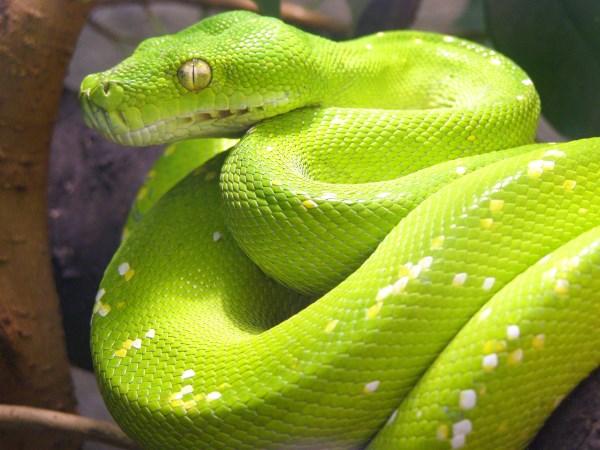 Unique Animals: 10 Uniquely Deadly Animals in the World - deadly animals, unique ...