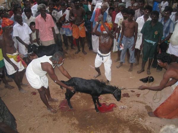 nacirema dating rituals in india