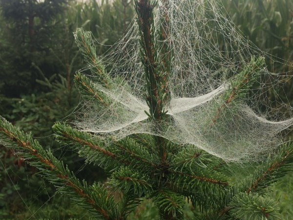10 of the World's Weird & Wacky Christmas Traditions - Nikki ...