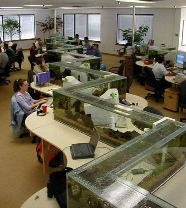 cool office dividers. 3Aquarium Zigzag Divider Cool Office Dividers S