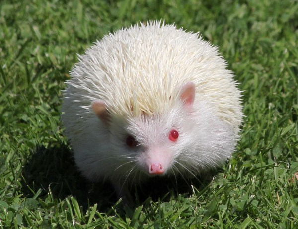 11 More Fascinating Albino Animals Oddee
