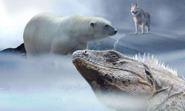Polar Bear Dog Breed Russian