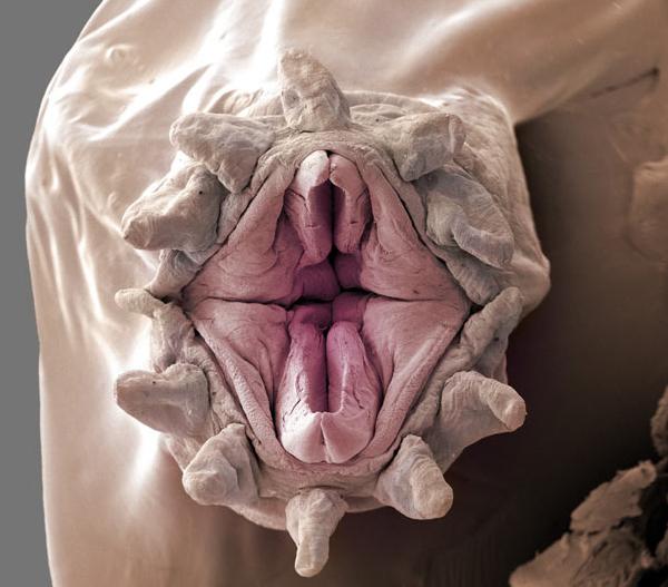 bigdicks into beast vagina