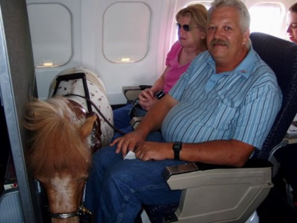 8 weird animals found on planes oddee for Air canada pet in cabin