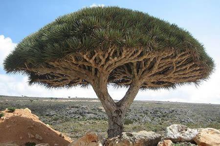 Perfect 10 Of The Worldu0027s Strangest Plant Species   Weird Plants, Strange Plants    Oddee