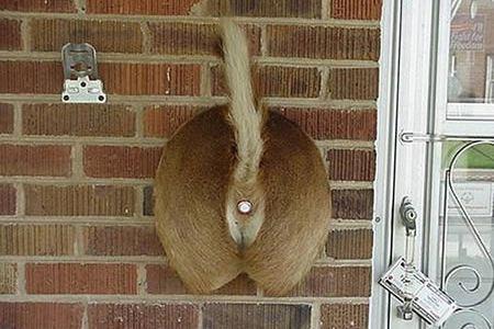 & 12 Most Creative Doorbells - funny doorbells cool doorbells - Oddee
